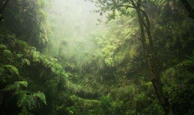 Cuadro Regenwald tropisch nass abenteuer