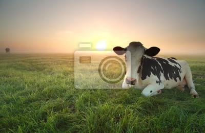 Relajado, vaca, pasto, amanecer