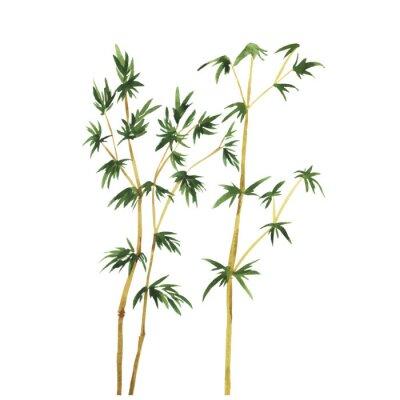 Cuadro Resumen árboles de bambú silvestre sobre fondo blanco. Dibujado a mano ilustración vectorial acuarela.