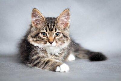 Cuadro retrato de la mentira gato