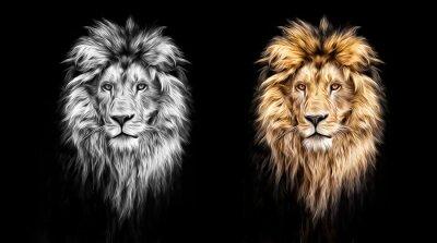 Cuadro Retrato de un león hermoso, león en la oscuridad, pinturas al óleo
