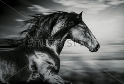 Cuadro Retrato del caballo español corriendo, foto en blanco y negro.