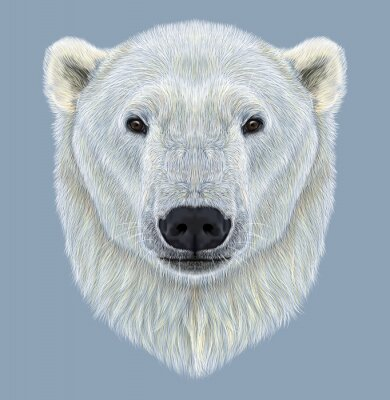 Cuadro Retrato ilustrado del oso polar
