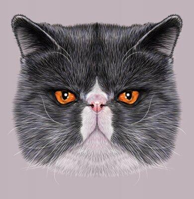 Cuadro Retrato ilustrativo de Maine Coon. Cute bicolor gato doméstico con ojos verdes.