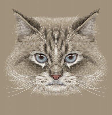 Cuadro Retrato ilustrativo del gato siberiano. Cute punto de color doméstico Gato con ojos azules.