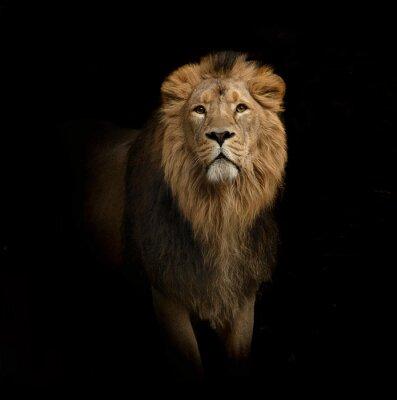 Cuadro retrato león en negro