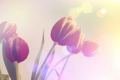 Cuadro Retro tulipanes