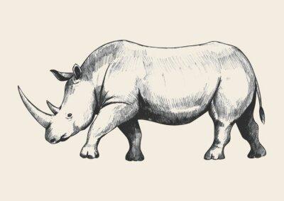 Cuadro Rhino Sketch