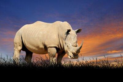 Cuadro Rinoceronte en el fondo del cielo del atardecer