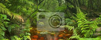 Río a través de la selva tropical en la Ruta del Jardín NP, Sudáfrica