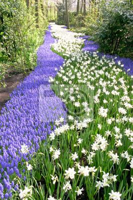 Río de la flor del jacinto