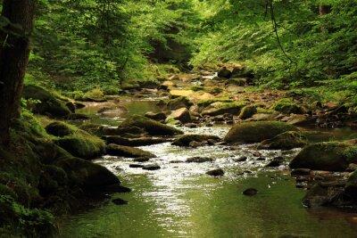 Cuadro río en el bosque