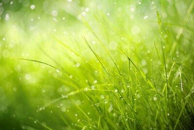Cuadro Rocío de la mañana en la hierba de la primavera