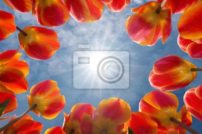 Rojo un tulipanes amarillos miran el sol soleado en el cielo