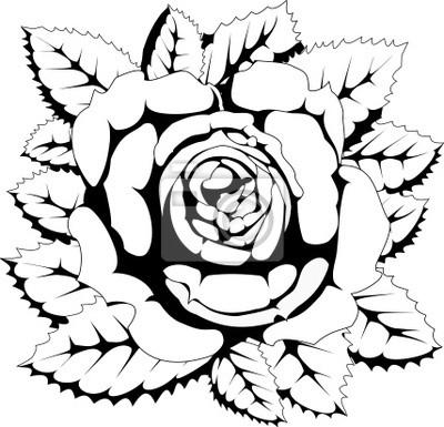 Rosa Blanco Y Negro Pinturas Para La Pared Cuadros Rosa Flor