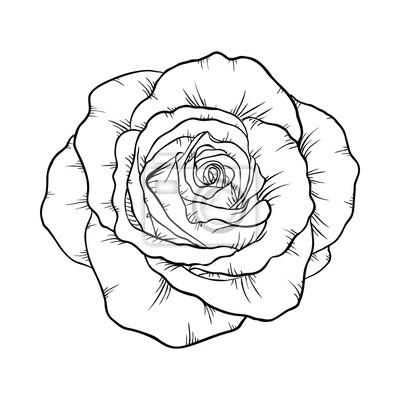 Rosa Blanco Y Negro Aislado Sobre Fondo Blanco Pinturas Para La