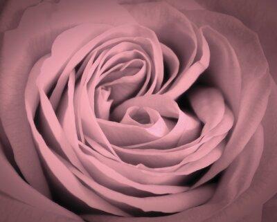 Cuadro Rosa de cerca de fondo de color rosa. Tarjeta de felicitación romántica del amor