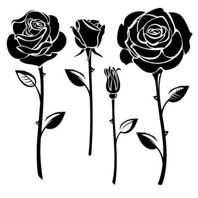 Rosas Pinturas Para La Pared Cuadros Capullo De Rosa Blanco Y