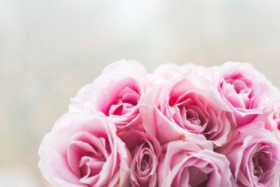 Cuadro Rosas rosas brillantes de fondo