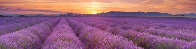 Salida del sol sobre campos de lavanda en la Provenza, Francia