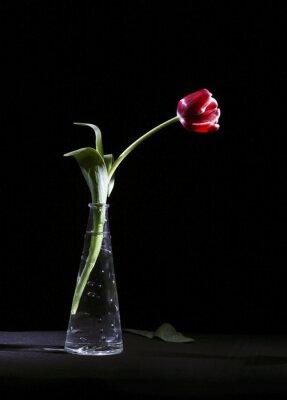 Cuadro Samotny tulipan