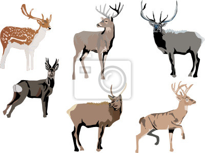seis ciervos de color