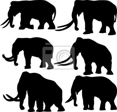 seis siluetas de elefantes aislados en blanco