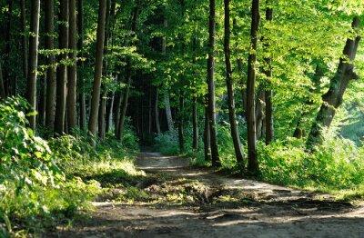 Cuadro sendero en el bosque