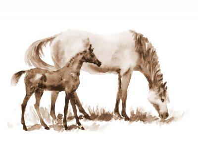 Cuadro Sepia yegua y el potro de la acuarela en blanco. Hermosa pintada a mano ilustración de dos caballos en el campo.