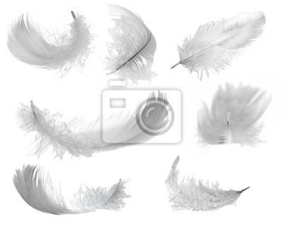 Cuadro siete plumas blancas