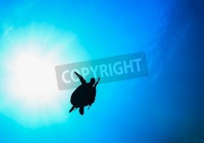 Silueta De Tortugas Marinas En El Océano Pinturas Para La Pared