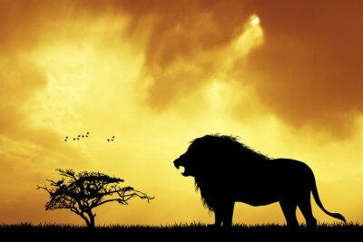 Cuadro Silueta del león en la puesta del sol