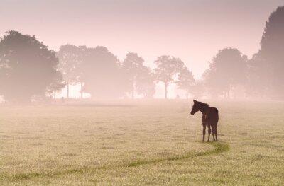 Cuadro silueta del potro en el pasto en la niebla