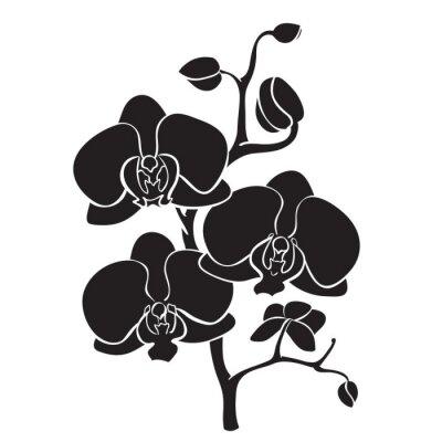 Cuadro Silueta ramificación de la orquídea