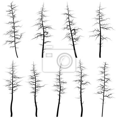 Siluetas De árboles Viejos Sin Hojas Madera Muerta Pinturas Para