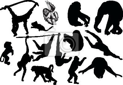 Cuadro siluetas mono fijan