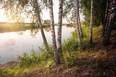 Cuadro slender birch