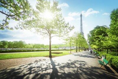 Cuadro Soleada mañana y Torre Eiffel, París, Francia