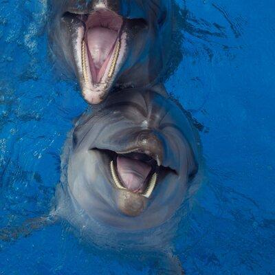 Cuadro Sonriendo delfines