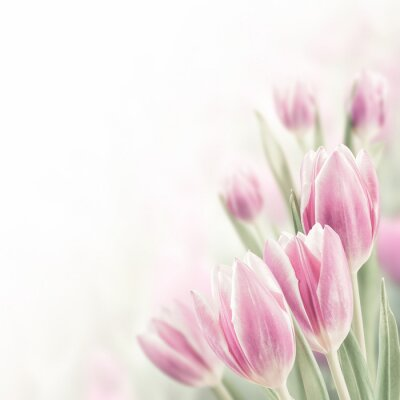 Cuadro Spring Background with Tulip