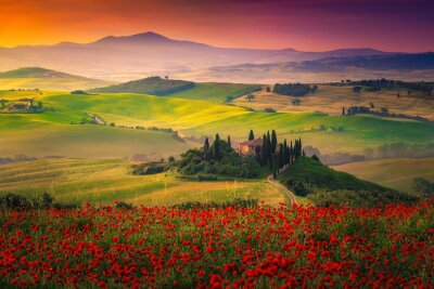 Cuadro Stunning red poppies blossom on meadows in Tuscany, Pienza, Italy