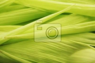 suave planta