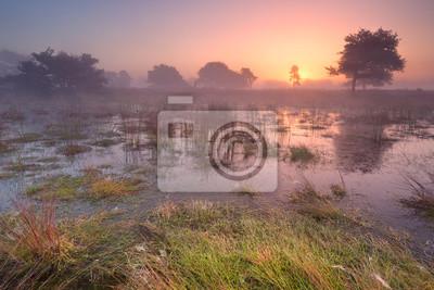 Sunrise over wetland in The Netherlands