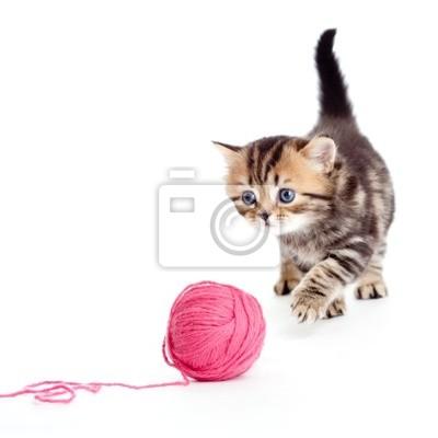 Cuadro tabby gatito británico que juega el ovillo o la bola rojo aislado