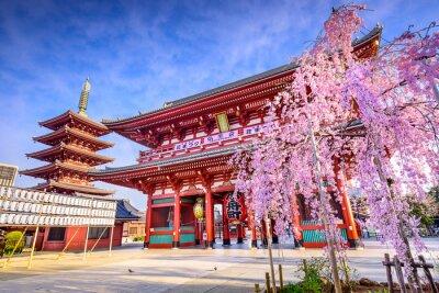 Cuadro Templo de Sensoji en Asakusa, en Tokio, Japón