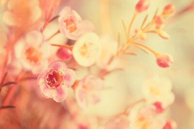 Cuadro Tono dulce y flor de enfoque suave