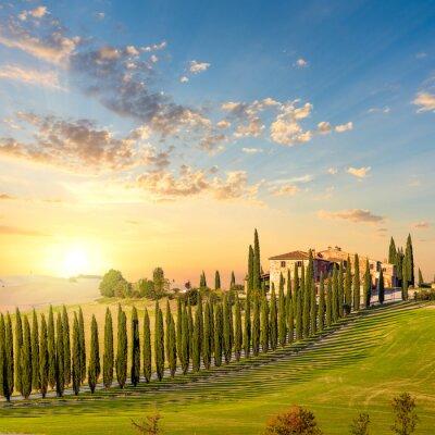 Cuadro Toscana en el ocaso - camino del campo con árboles y casa