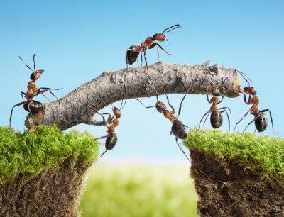Trabajo en equipo, equipo de hormigas costructing puente pinturas ...