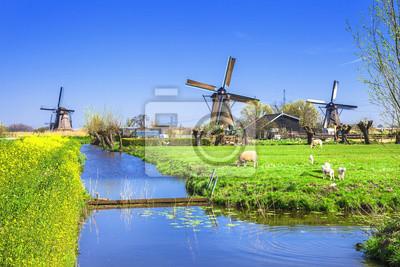 Tradicional Holanda Campo