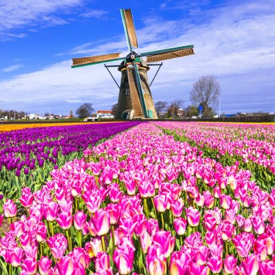 Cuadro Tradicional, Holanda, campo, molinos de viento, tulipanes